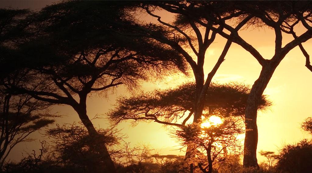 Remote_ep3_Tanzania-Hero-med-1024x604.jpg