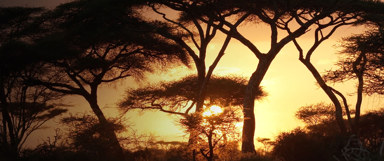 Remote_ep3_Tanzania-Hero-lrg-1440x604.jpg
